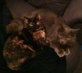 gatecats
