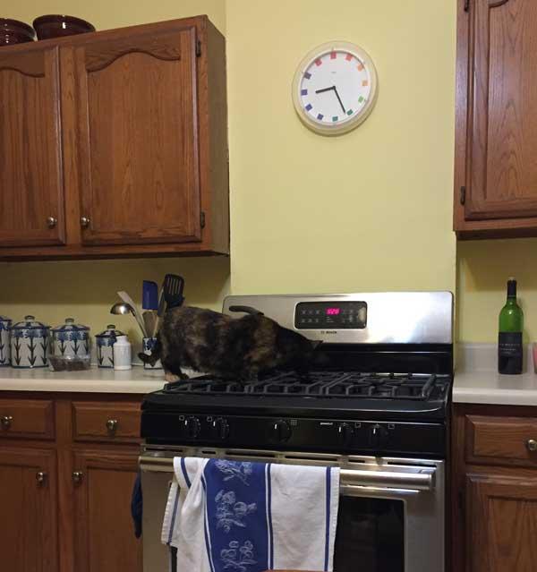 Brazen cat.